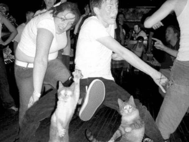 Cats In The Pit